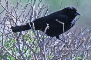 Black bird! by WesHPhotography