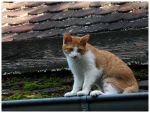 Cat On The Roof by Fox82