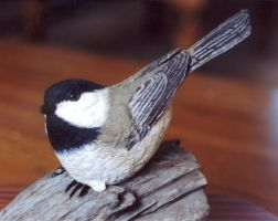 Black- Capped Chickadee by Bagheera3