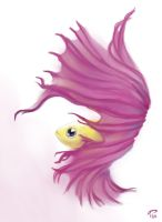 Shy Betta by Majoh
