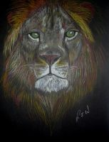 Lion by Pictaview