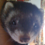 Pepsi my Polecat by Secret-Blaze