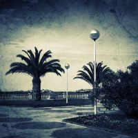 Palms by Aiae