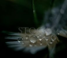 Water-Drop-Feather-67 by Evil-e33