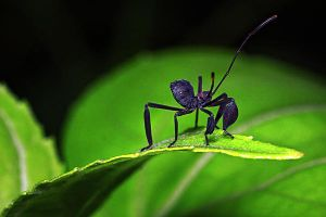 Insects 53 by josgoh
