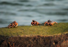 Crabs Conference by pretheesh