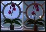 Orchids2 by FreyrStrongart