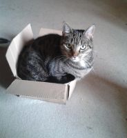 Kitty in a too small box by Schuckie