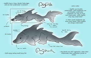 Dogfish and Dogshark concepts by AppleRat