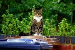 The Stare by Kaz-D