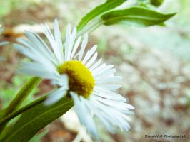 Small, close, white... by DianaVVolf