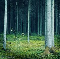 forest 14 by orlibraorli