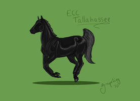 Tallahassee: EmpireEquestrian by Grapeling