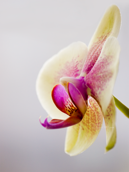 Orchid love by Katari01
