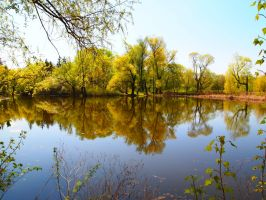 The pond by Mellisia