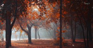 Lightshow by ildiko-neer