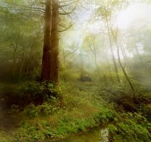 Enchanted Woodland by RyanMichael