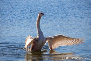 Swan qi gong exercise no.3 by MT-Photografien
