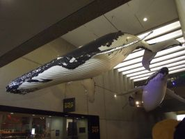 Life size Humback whales by trialsgirl10