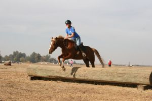 Chestnut Flaxen Mane Mare Eventing Jumping by HorseStockPhotos