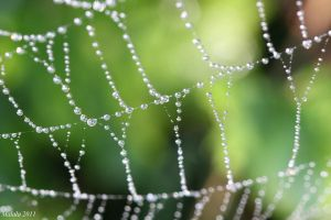 spider web by malaladanila