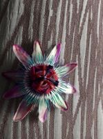 Edited passionfruit flower by reecekikluvloot
