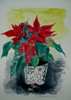 Poinsettia by Sabinzart