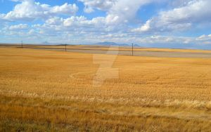 Montana fields by ChaosWolfPictures