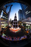 Fisheye tree by ace10414