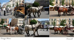 Carriage Horses pack by Comacold-stock