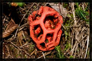 Fungus of the year 2011 by deaconfrost78