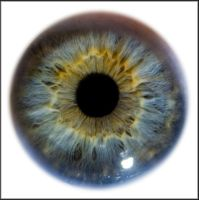 Iris Eye Macro Stock by zpyder