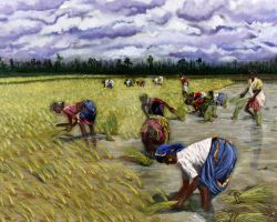 Kerala's Rice Planters by j0rosa