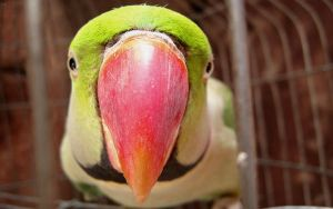 Parrot by dipur86