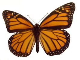 moths and butterflies stock 94 by hatestock
