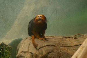 Tamarin by OverStocked