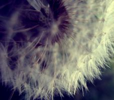 i could live in a dandelion by edgeoftheocean