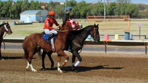 Racehorse Stock 27 by Rejects-Stock
