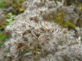 Autumn impressions: Seeds by Paul774