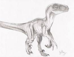 Utah Raptor by Young-Noble