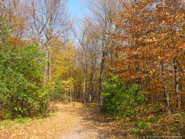 Fall at the Arboretum 819 by caybeach