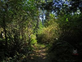 The Covered Trail Through The Woods by wolfwings1