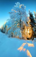 57881 by KariLiimatainen