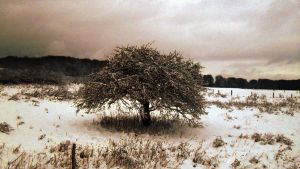 Tree no leafs by Wormed