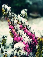 Winter flowers by Klytia70