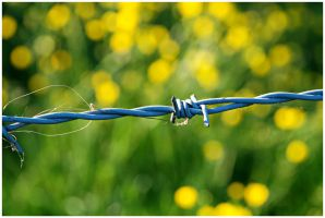 barbed beauty by neme313