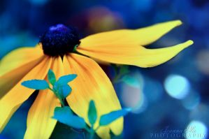 feeling blue by Capere-Omnes