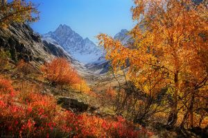Majestic Autumn by FlorentCourty