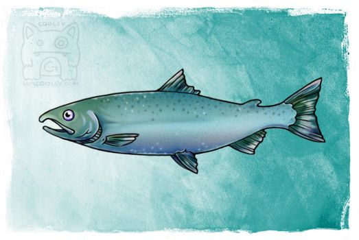 NPS Commission - Coho/Silver Salmon (Non-Spawning) by cooley