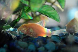 Colorful Cory by BS4711